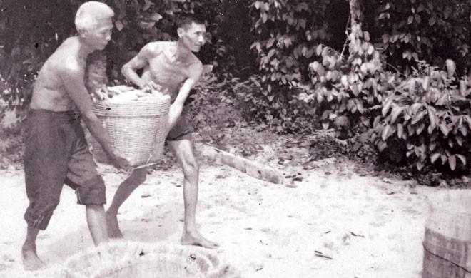 Những sọt cà chua, khoai mì giấu vũ khí đưa đi tập hợp ở hầm bí mật nhà ông Năm Lai để Tổng tiến công Mậu Thân năm 1968. Ảnh tư liệu