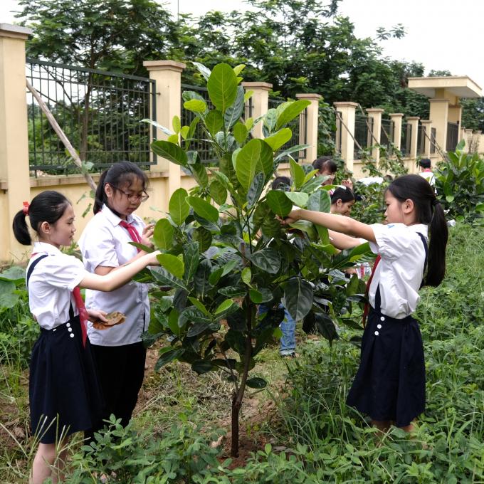 Vinamilk và hành trình 9 năm trồng cây góp phần chống biến đổi khí hậu, ô nhiễm môi trường