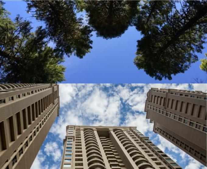 Nhìn lên những tán cây dễ chịu hơn nhiều nhìn những đường sọc của các toà nhà