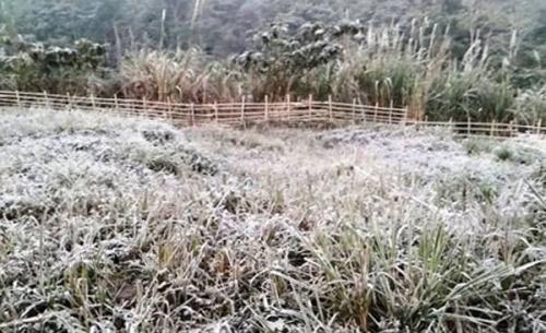 Băng tuyết sáng sớm ở Mường Lống (Kỳ Sơn, Nghệ An) / Ảnh: Báo Nghệ An