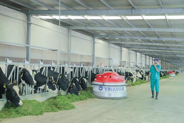 Vinamilk hiện có 13 trang trại bò sữa chuẩn quốc tế trên cả nước