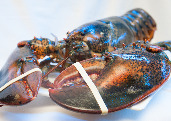 Tôm hùm Alaska khá hút hàng vì người tiêu dùng chuộng mua do có giá mềm.