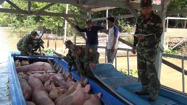 Buôn lậu heo bùng phát vì giá thịt tăng cao