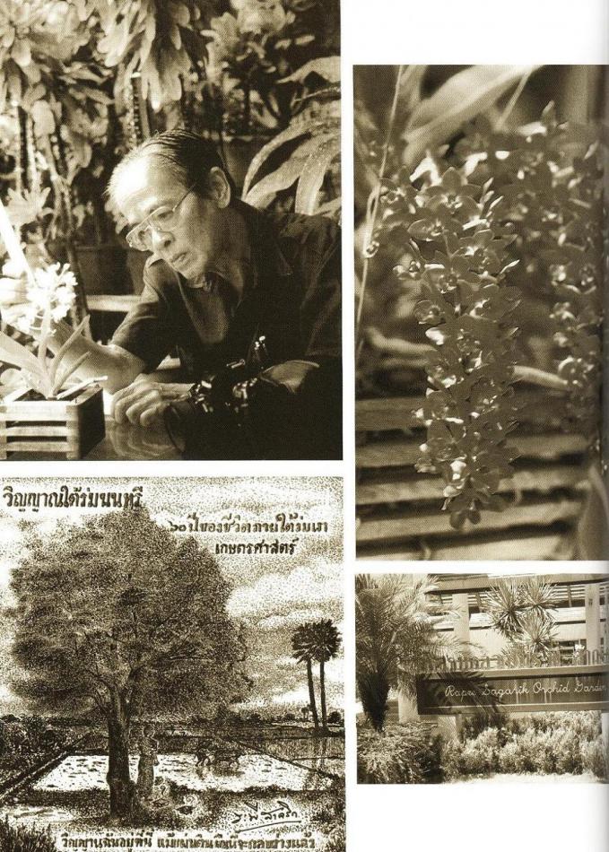 Giáo sưRapee Sagarik nghiên cứu loài hoa lan.