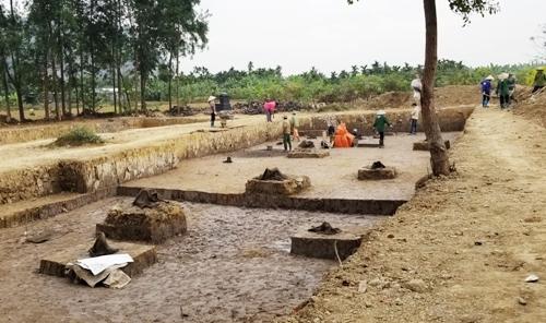 Bãi cọc lim nằm sâu dưới lớp bùn trầm tích trên cánh đồng Cao Quỳ, xã Liên Khê, huyện Thủy Nguyên. Ảnh: Giang Chinh.