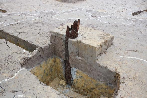 Những chiếc cọc được dự đoán là dấu tích của trận đánh quân Nguyên Mông lần thứ 3 năm 1288 - Ảnh: T.Đ.