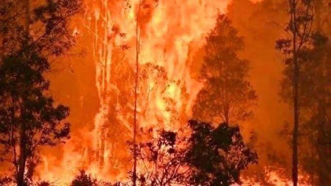 Cháy rừng lan nhanh trên toàn nước Úc, nửa tỷ loài động vật thiệt mạng