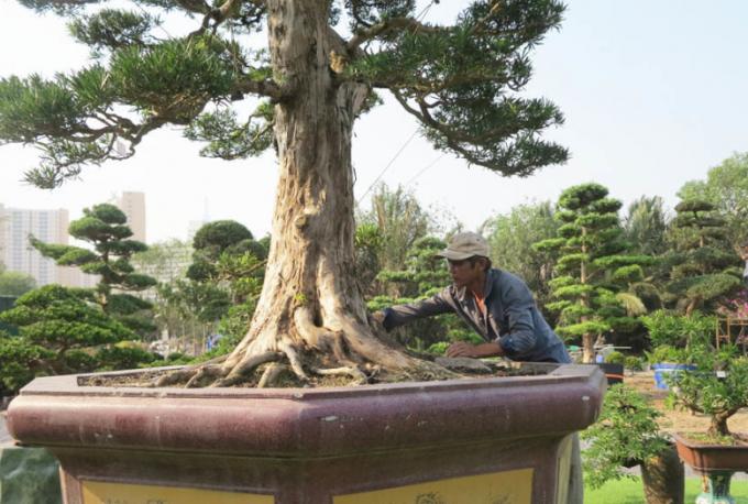Anh Sáu cho biết việc chăm sóc cây đòi hỏi phải kiên trì, khéo léo.