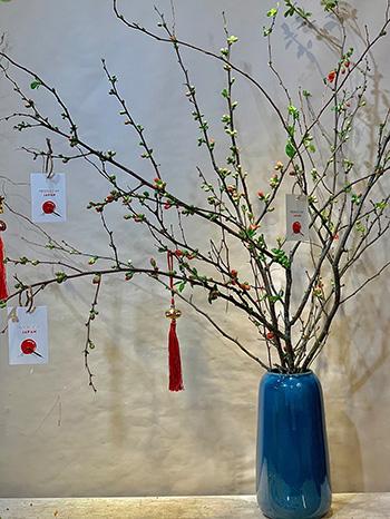 Hoa đàoankaneboke từ Nhật Bản.