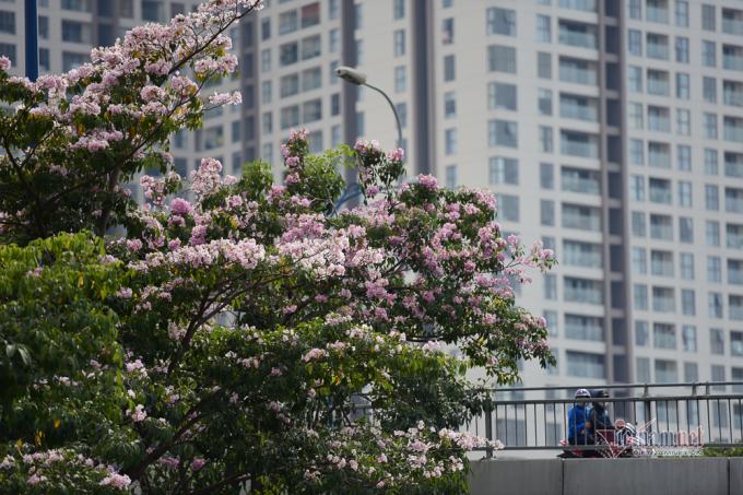 Hoa nở rộ trên đườngHàm Nghi, Quận 1.