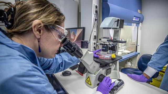 Các nhà khoa học Australia đã xác định được cơ chế hệ miễn dịch của con người chống lại virus Covid-19