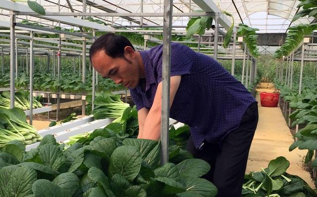 Vườn rau sạch của gia đình anh Sơn rộng 2ha, được trồng theo tiêu chuẩn Vietgap. Mỗi một năm anh Sơn thu hoạch khoảng 300 tấn rau đưa ra thị trường, chủ yếu là cung cấp cho các nhà hàng, khách sạn ở Hà Nội.