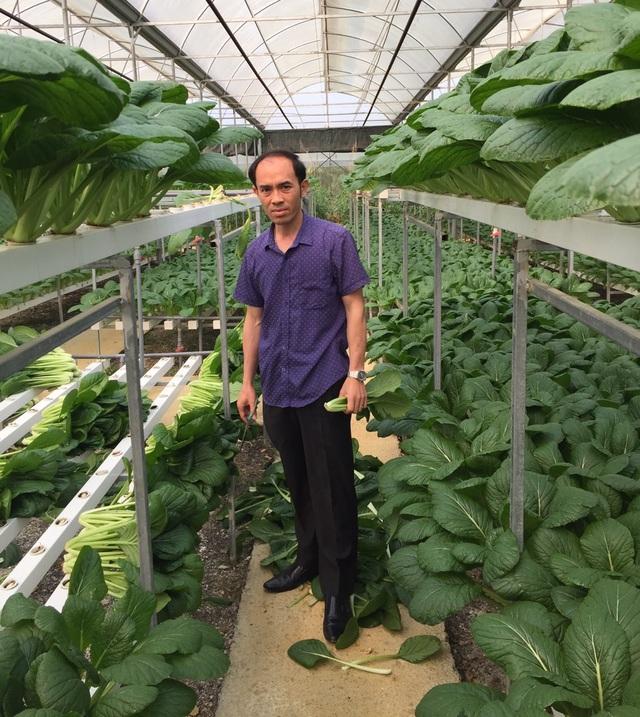 Chủ vườn rau ở Lai Châu ủng hộ rau sạch cho khu cách ly tại Hà Nội
