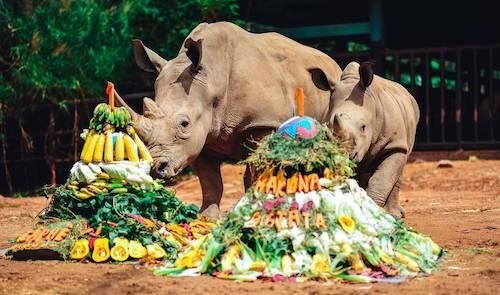 Vinpearl Safari cũng vừa tổ chức sinh nhật thôi nôi đầu tiên choanh cả Matata và chị 2 Cà phê vào 3/4.
