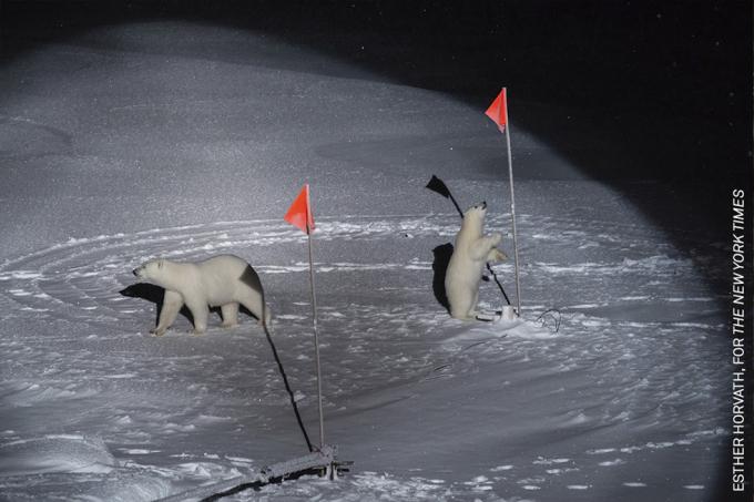 """Bức ảnh chiến thắng hạng mục ảnh """"Môi trường"""" với nhân vật trung tâm lànhững con gấu đang tiếp cận các thiết bị phá băng. Esther Horvath đã ghi lại khoảnh khắc nàyở thời điểm 6 tháng chìm trong bóng tối của Bắc cực."""