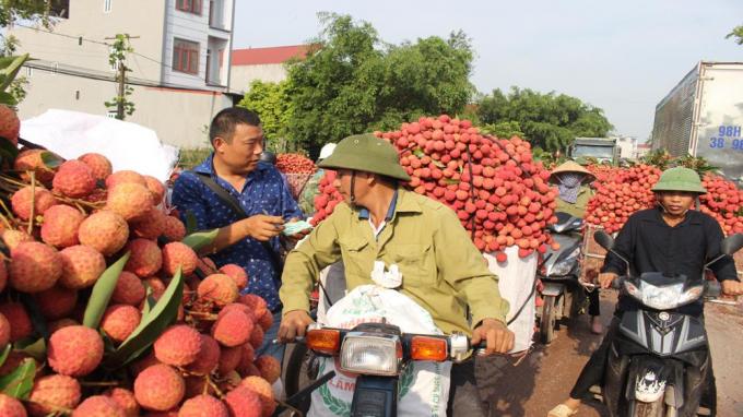 Gần 200 thương nhân Trung Quốc chuẩn bị sang Việt Nam mua vải thiều