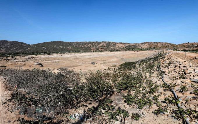 Lòng hồ Ông Kinh, huyện Ninh Hải khô cạn đến tận đáy, chỉ còn sót lại những xác cây chết và các đường ống dẫn nước do hạn hán kéo dài. (Ảnh: TTXVN)