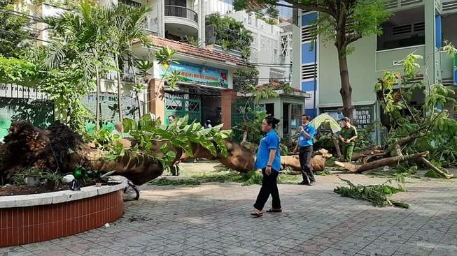 Một học sinh đã tử vong trong vụ bật gốc cây cổ thụ ở trường học