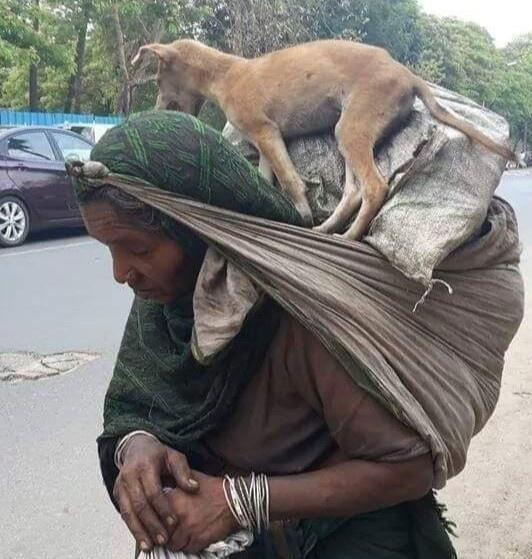 Trong bức ảnh là một người phụ nữ Ấn Độ bọc hành lý sau đầu, ở trên là chú chó nhỏ. TheoGulfnews, người phụ nữ này là lao động nhập cư, vì dịch bệnh bà phải đi bộ về nhà. Lúc này, bà đã kiệt sức nhưng không nỡ đặt chú chó xuống.Ảnh:Twitter.