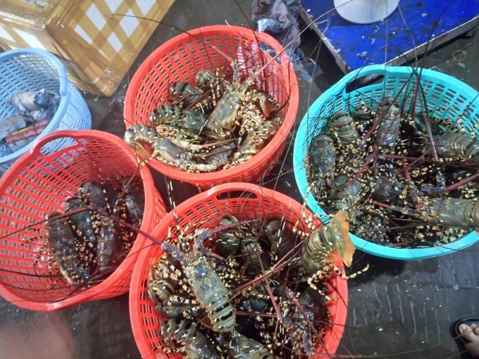 Giá tôm hùm ở Bình Ba giảm mạnh