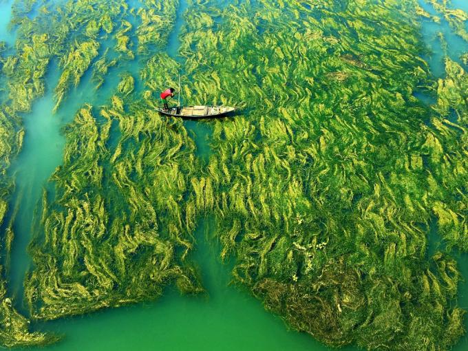 Bức ảnh chụp dòng sông vào mùa đông, khi nước cạn, do các phản ứng quang hóa, sinh vật như rêu được hình ảnh và gây ô nhiễm. Nhiếp ảnh giaApratim Pal là tác giả của bức ảnh mô tả toàn bộ khung cảnh nhìn giống như là một người đang vượt ra ngoài thế giới.