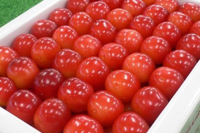 Tại Việt Nam, cherry Nhật xuất hiện trên thị trường khoảng 2-3 năm trở lại đây