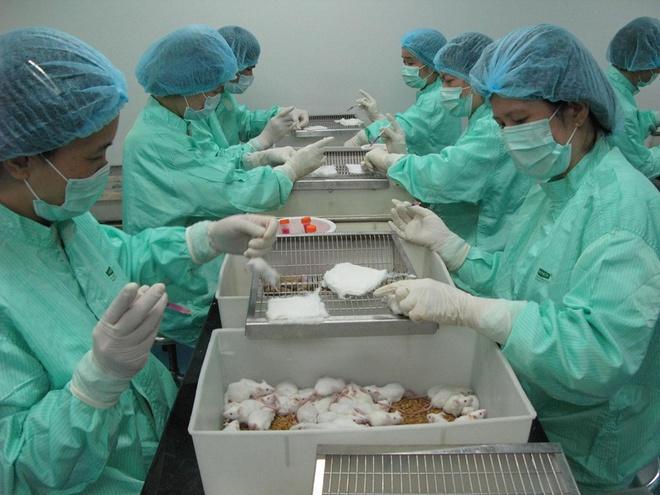 VABIOTECH đã thử nghiệm thành công vaccine Covid-19 trên chuột. Ảnh: BSCC.