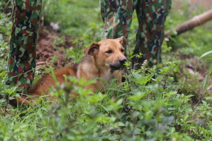 Chú chó được đặt tên Covid, do các chiến sĩ biên phòng xin về và nuôi từ đợt dịch thứ nhất. Covid có nhiệm vụ báo động có người lạ, xua đuổi rắn rít và côn trùng đi vào lán.