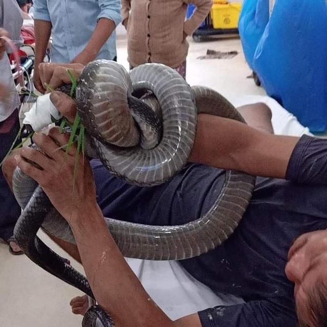 Khi vào viện, anh T. vẫn giữ chặt con rắn trên tay.