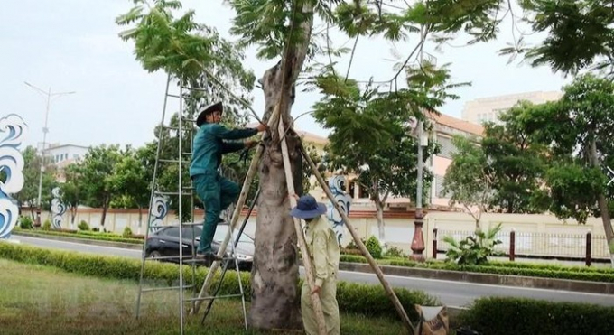 Cây xanh tại công viên và dọc các tuyến đường trung tâm thành phố Đồng Hới được công nhân cắt tỉa, chằng chống cẩn thận. (Ảnh: Võ Dung/TTXVN)