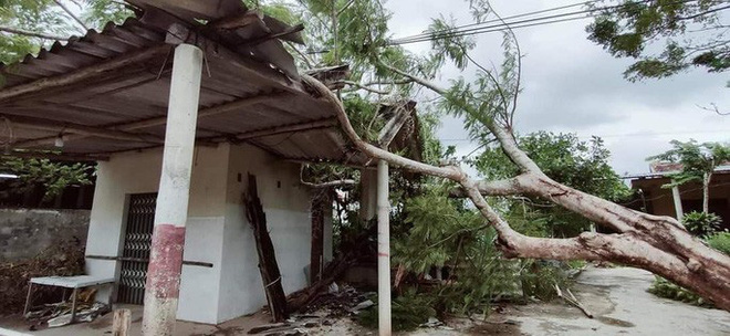 Cây lớn bị quật đổ nằm la liệt tại xã Cự Nẫm, huyện Bố Trạch, Quảng Bình.