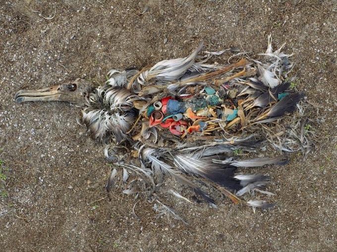Đây là hình ảnh cho thấy tình hình ô nhiễm môi trường nghiêm trọng trên toàn thế giới.