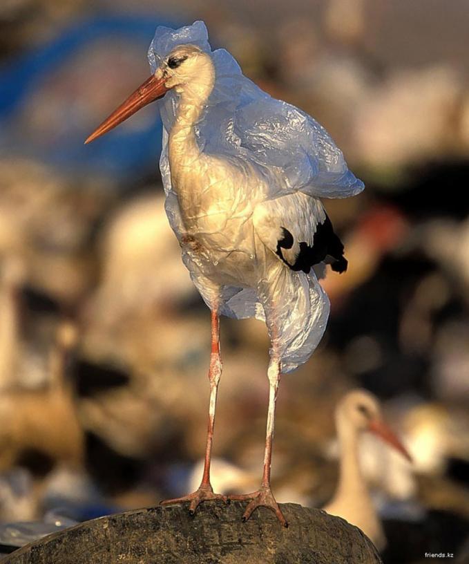 Một con cò tội nghiệp phải mặc áo mưa dù trời nắng chỉ vì đây là một trong những loại rác thải của môi trường.