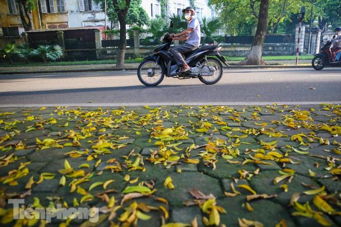 Lá vàng trải dài khắp con đường là