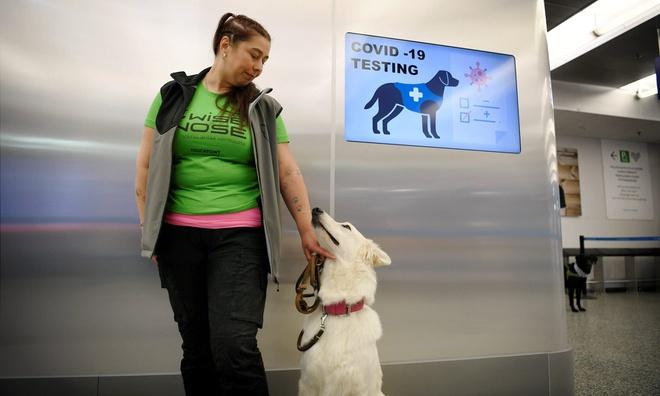 Phần Lan dùng chó để phát hiện người nhiễm Covid-19