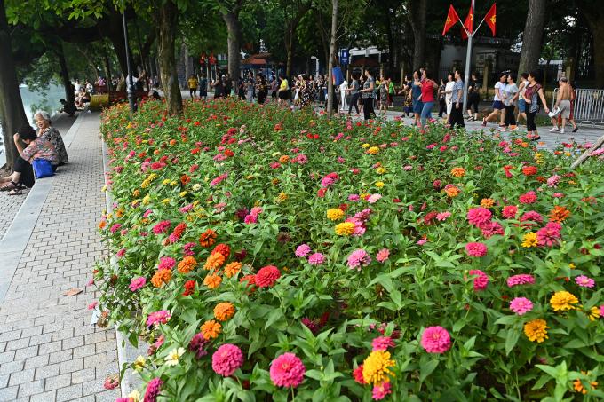 Từ giữa tháng 9, UBND quận Hoàn Kiếm cũng triển khai trồng, trang trí hoa và cây cảnh ven hồ.