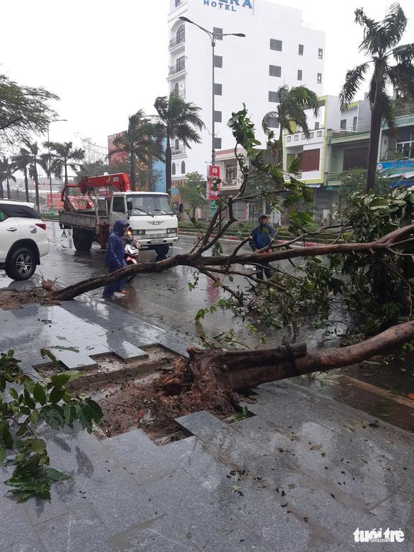 Cây xanh ngã đổ trên đường Hùng Vương (TP Tuy Hòa, Phú Yên) - Ảnh: TRẦN HỮU