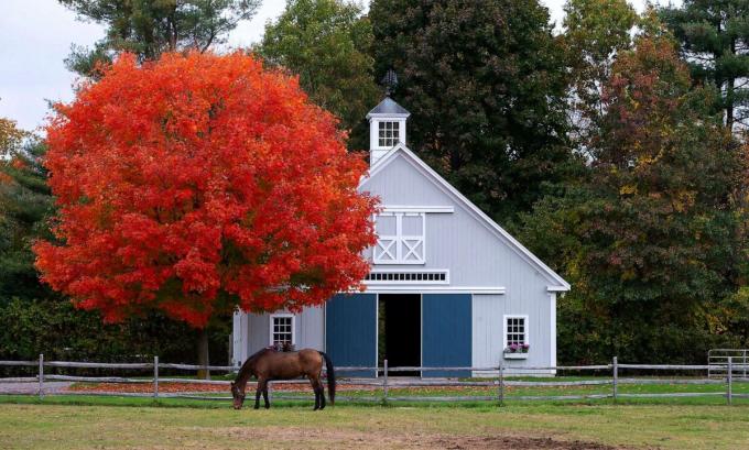Những tán lá xanh trên các rặng cây phong đã chuyển thành màu đỏ sẫm, vàng rực trải dài khắp Bắc Mỹ. Trong ảnh làBoxford, bang Massachusetts, Mỹ.Ảnh:EPA