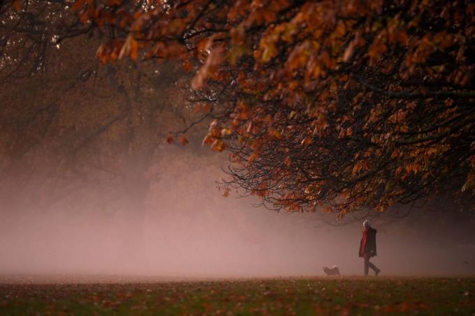 Công viên Greenwich, London, Anh,nơi có nhiều hươu sinh sống. Ảnh:AFP.