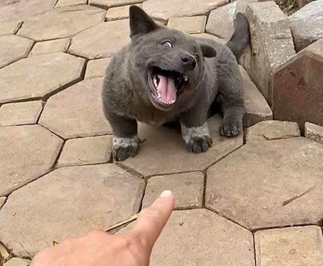 Những chú chó, mèo Việt Nam trở thành hiện tượng mạng khắp thế giới