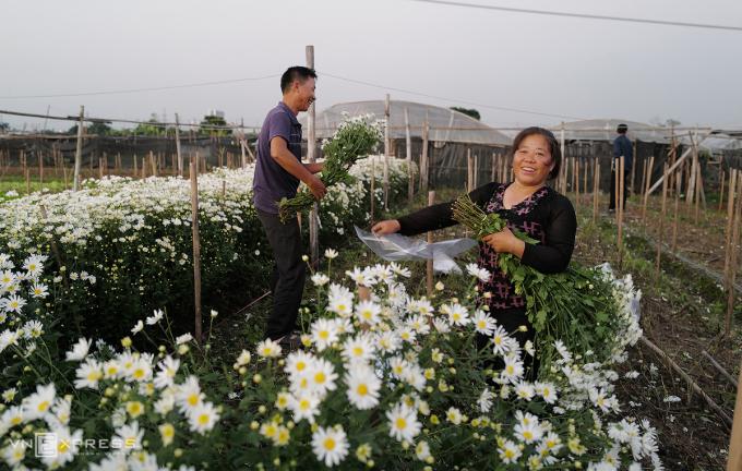Gia đình anh Nguyễn Anh Tuấn và chị Nguyễn Thị Mai ở cụm 12, phường Tây Tựu, đã thu hoạch 5 luống hoa rộng hơn 2 sào.