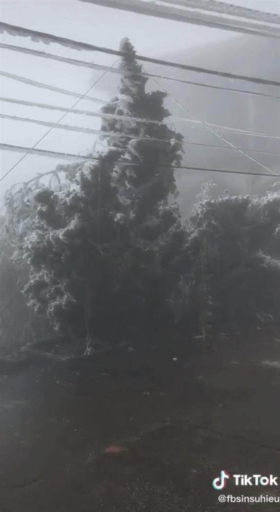 Thực hư cảnh Mẫu Sơn phủ trắng băng tuyết