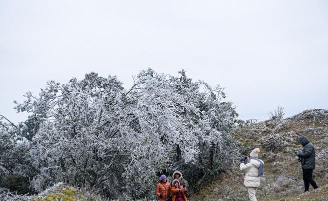 Băng giá phủ trắng đỉnh Mẫu Sơn liên tiếp 3 ngày qua. Ảnh:Thạch Thảo.