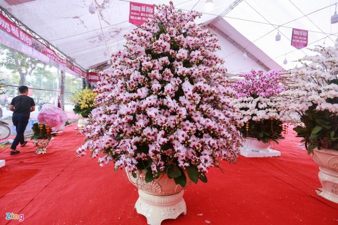 Chậu lan hồ điệp cao hơn 2 mét, gồm 400 cành hoa có giá 115 triệu đồng. Trong đó, tiền hoa là 100 triệu đồng, còn lại là tiền chậu.