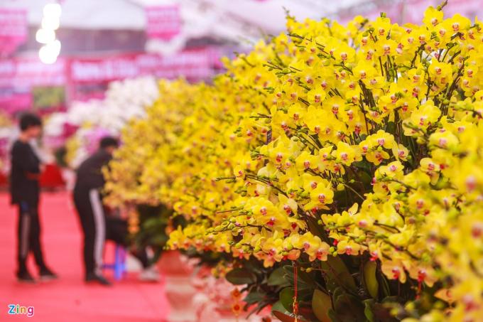 Hoa sẽ có một số màu sắc chủ đạo như vàng, cam, đỏ tím, trắng...