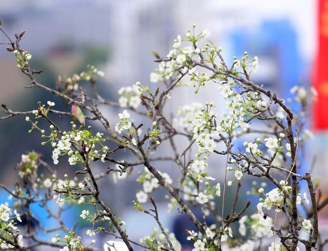 Mỗi bông hoa hồm 5 cánh xếp cạnh nhau.