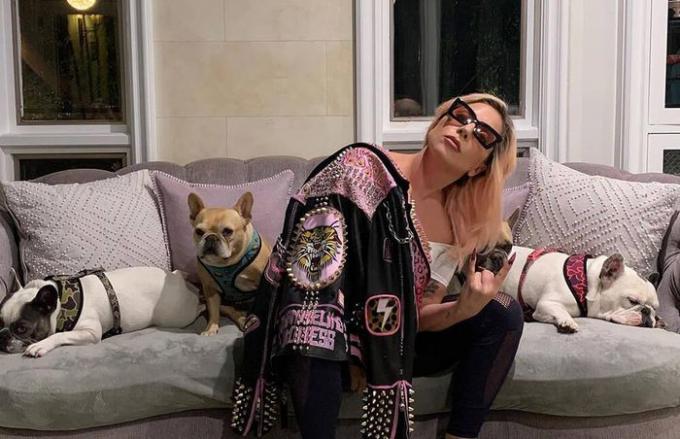 Lady Gaga treo thưởng nửa triệu đô tìm 2 chú chó cưng bị bắt trộm