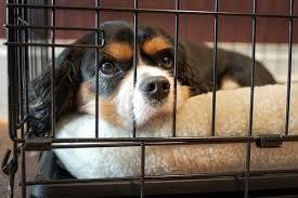 Từ ngày 20/4, phạt đến 3 triệu đồng đối với hành vi đánh đập, hành hạ vật nuôi