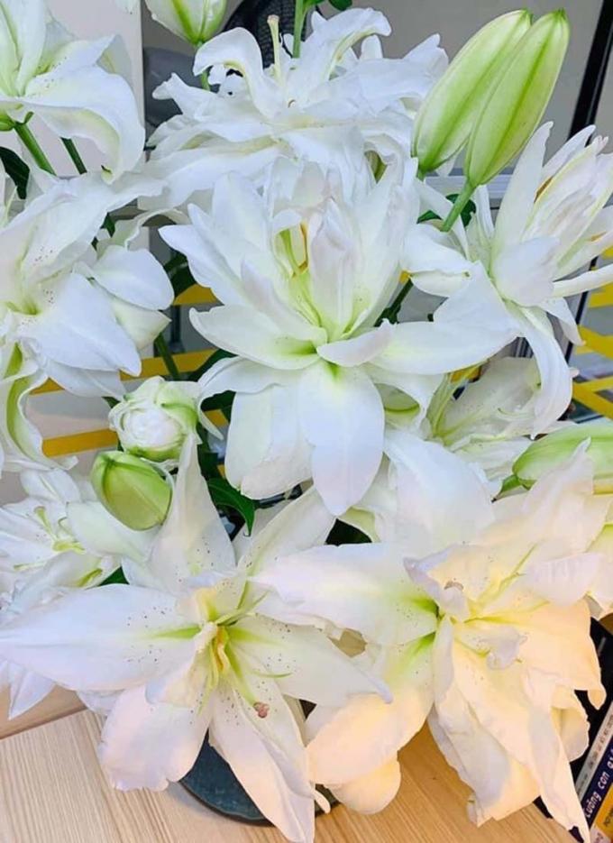 Hoa ly kép trắng đang gây sốt trên thị trường