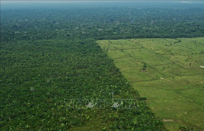 Khoảng rừng Amazon bị chặt phá tại Brazil. Ảnh tư liệu: AFP/TTXVN